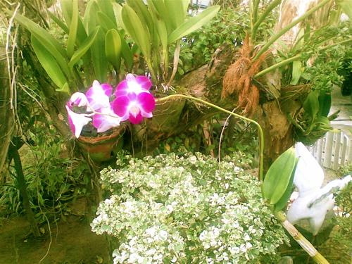mariels-orchids