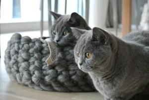 Katenpaar Mio und Leeloo in ihrem neuen Korb