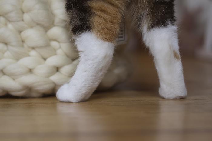 mariemeers Katze Karlii Pfötchen