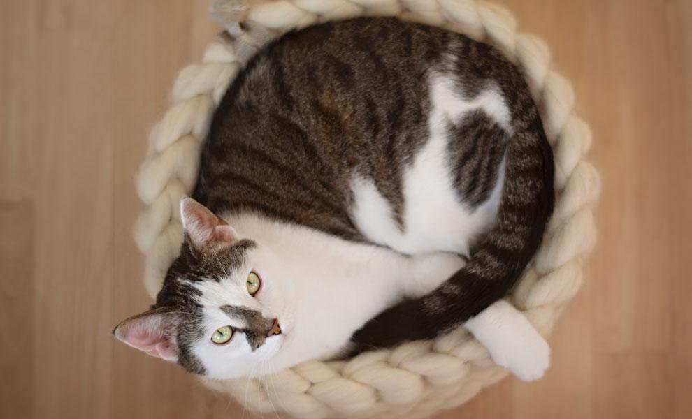 Katze-Korb