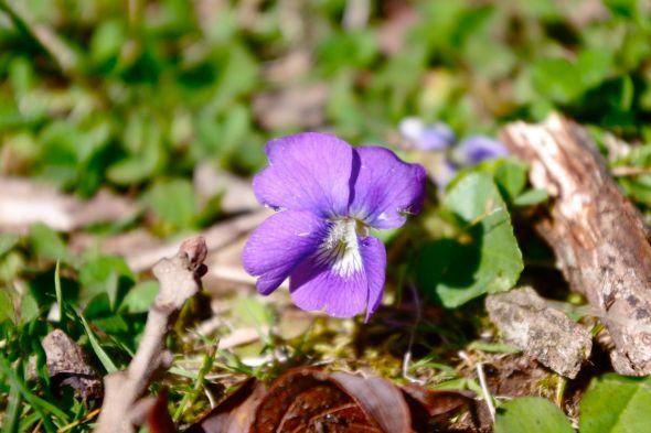 05 violet