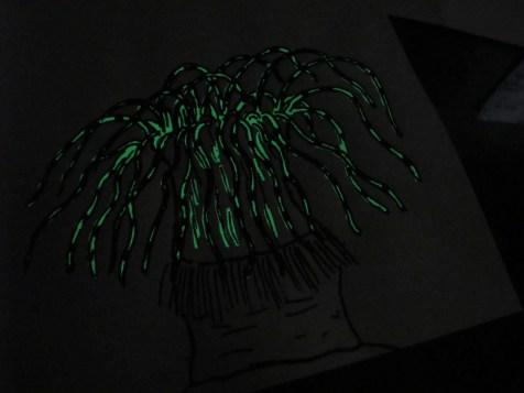 Portfolio Animaux bioluminescents