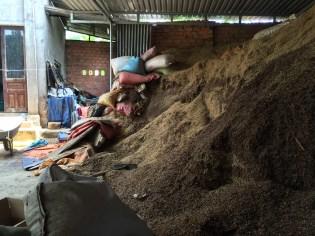 Coffee husks in Dalat, Vietnam