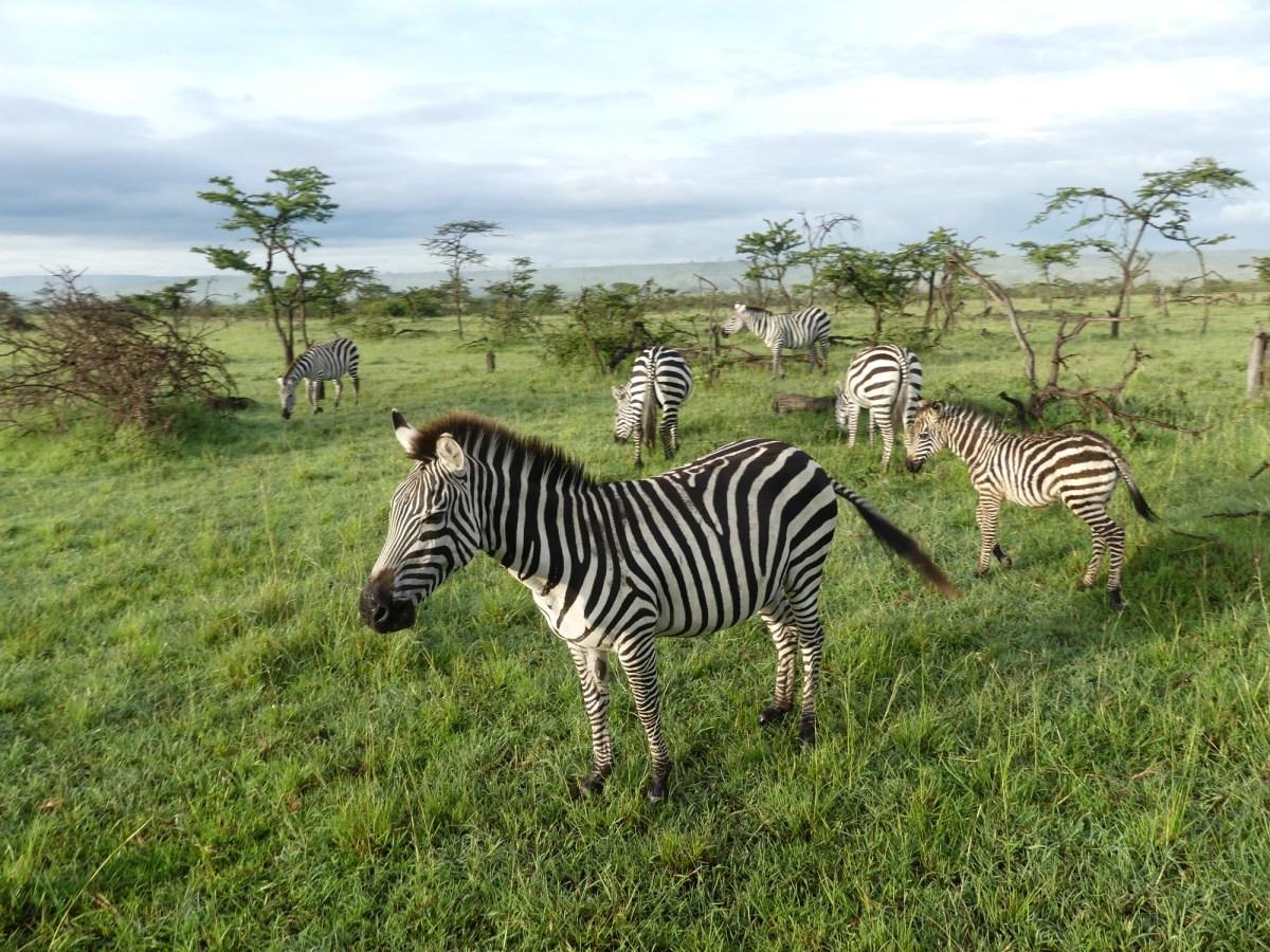 Our last week volunteering in Kenya with African Impact