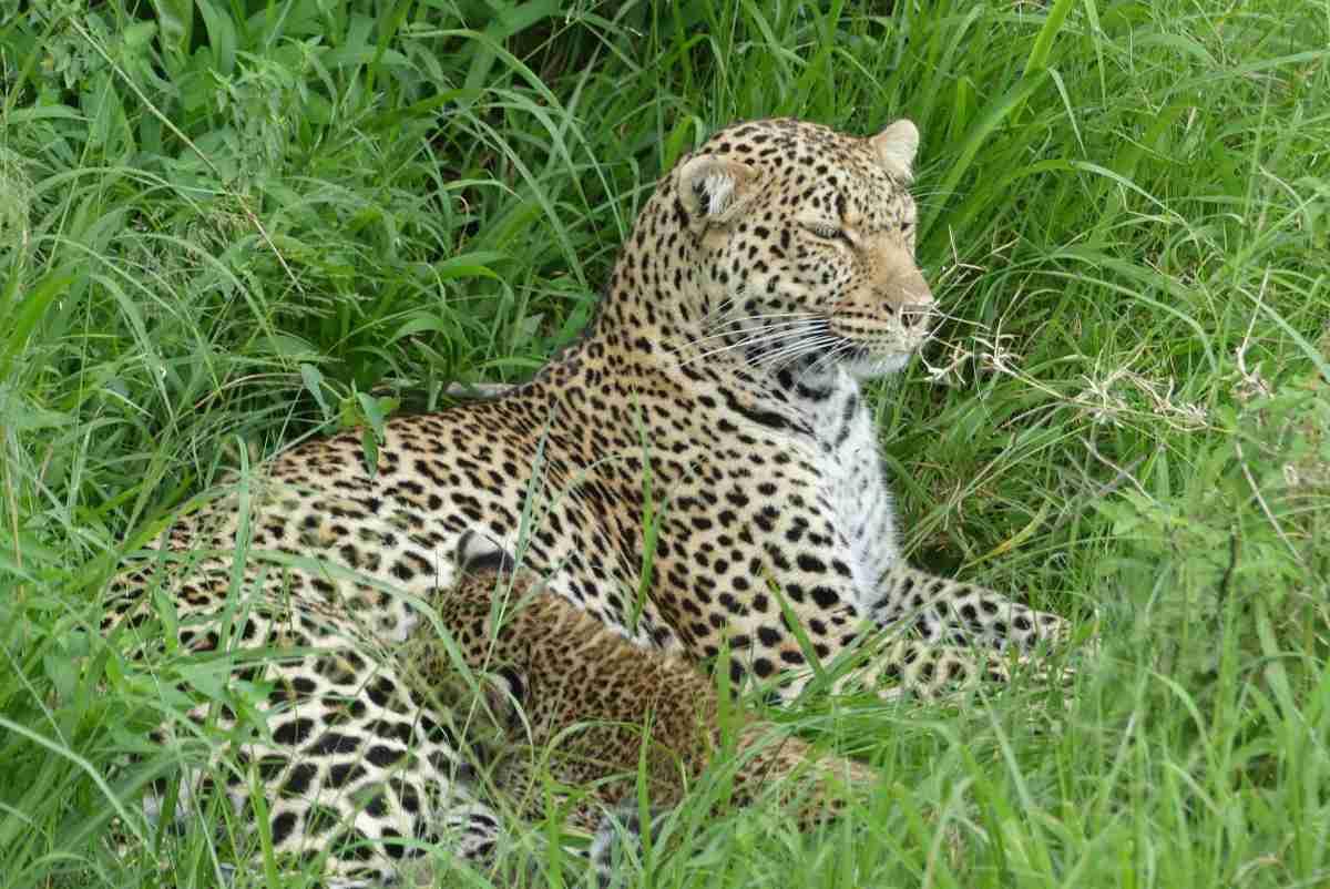 Masai Mara Reserve – Day 1