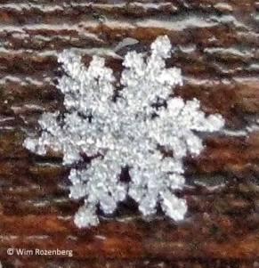 Snow cristal by Wim Rozenberg