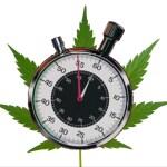 60 Minutes on Marijuana