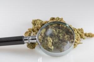 Senate Passes Marijuana Research Bill One Week After House Approves Similar Legislation