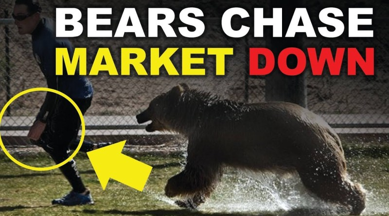 BEARS IN THE CANNABIS SECTOR? FUTURE PREDICTIONS FOR 2019