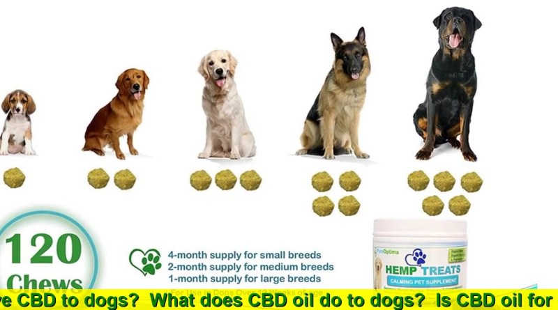 CBD oil for dogs. Hemp Oil For Dogs