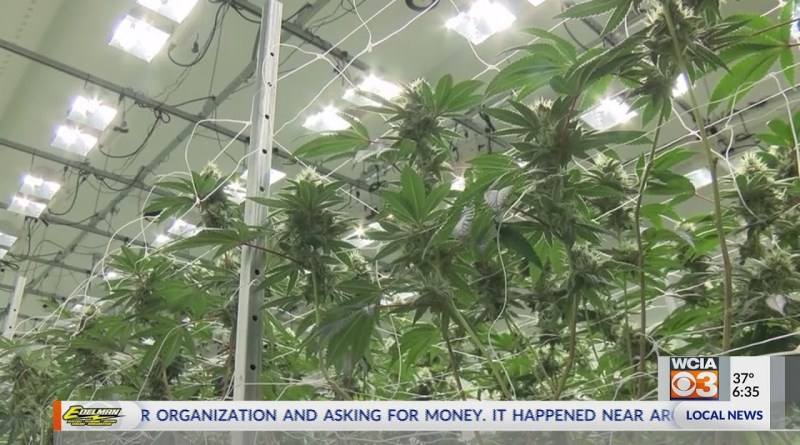 Cultivation centers prepare for marijuana legalization