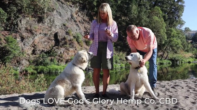 Dogs and pets  LOVE CBD !