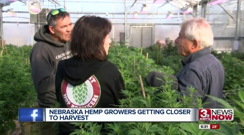 NE Hemp Growers Closer to Harvest