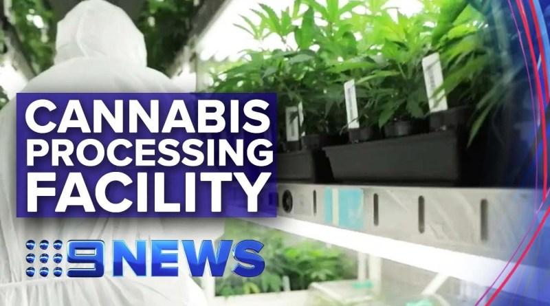 Victoria opens first medicinal cannabis processing facility | Nine News Australia