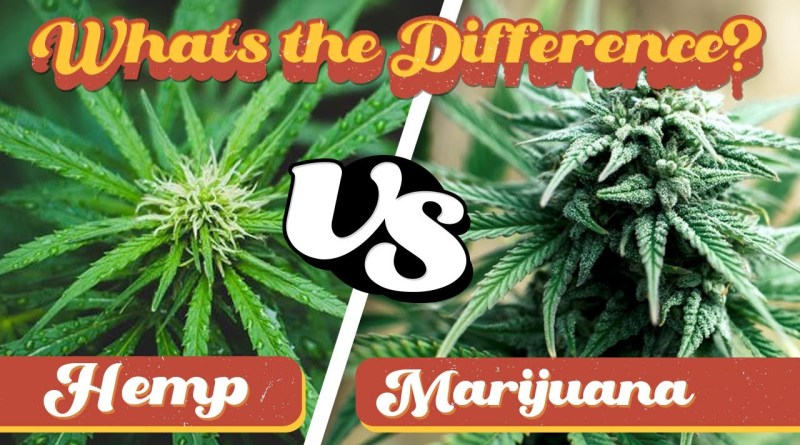 What is the Difference? Hemp & Marijuana
