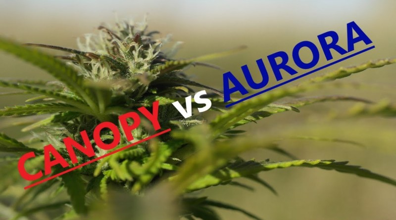 CANOPY or AURORA ! Which to buy ? Are Best Marijuana Stocks ?