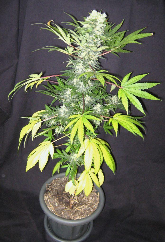 Succulent Plants Sale Online