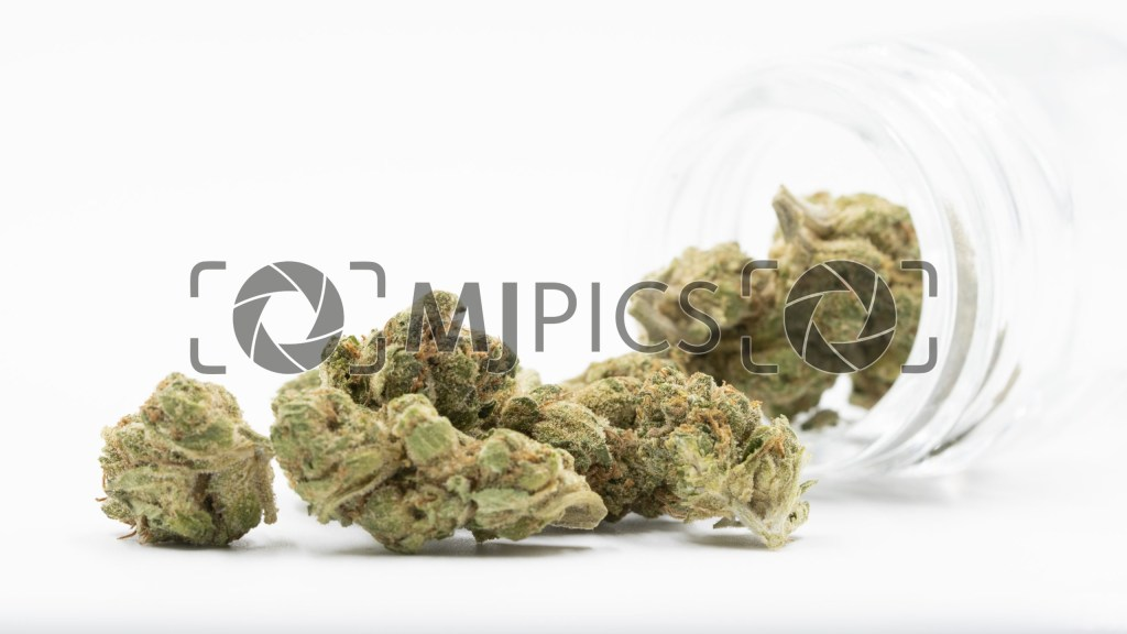 Amnesia Autoflower 10000163 download