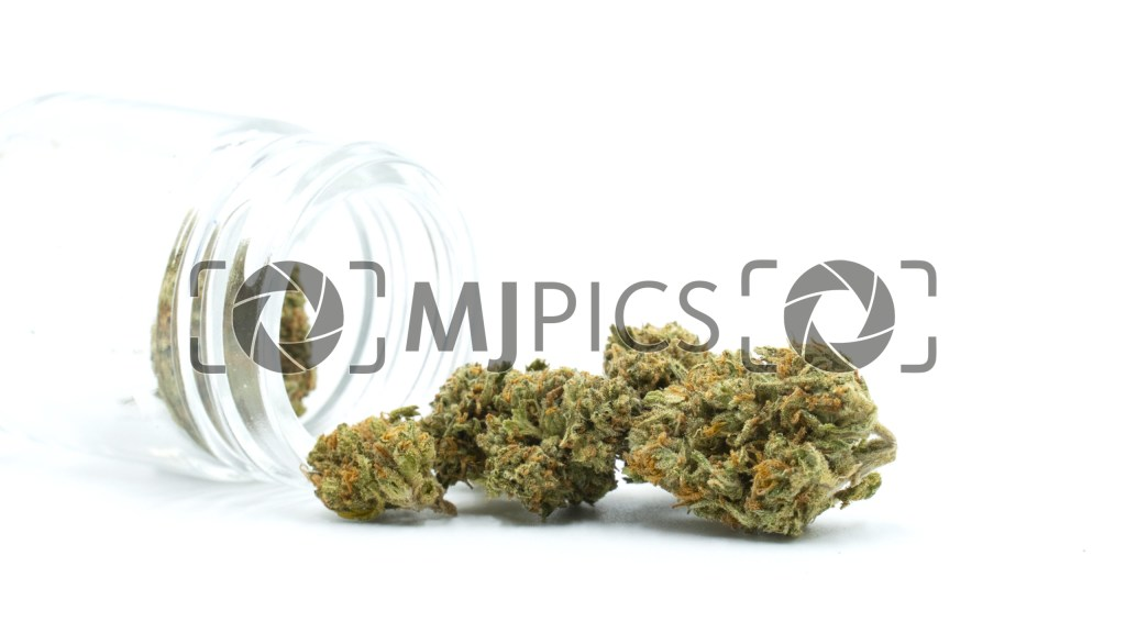 Jack Herer 10000254 download