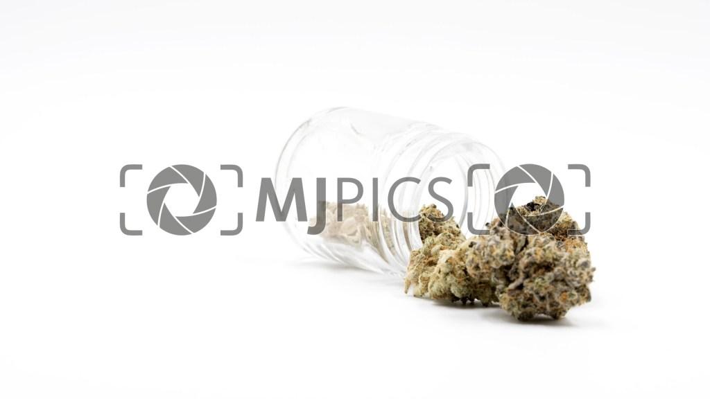 Blueberry X Lemon Haze Autoflower 10000422 download