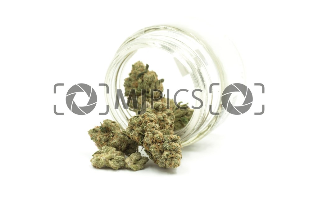 Skywalker OG 10000877 download