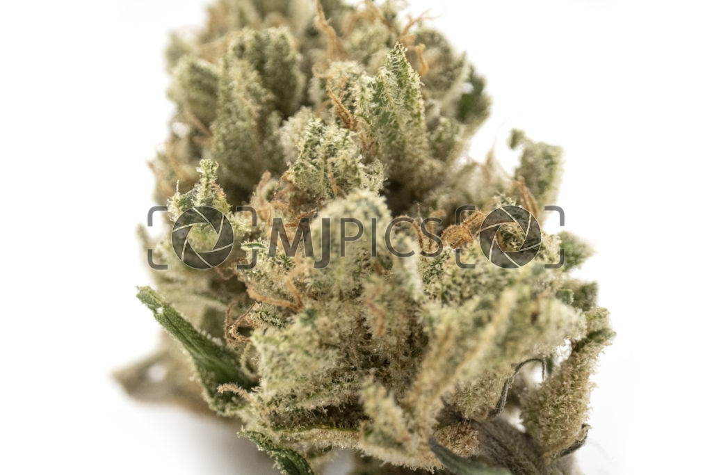 Strawberry Cough 10001202