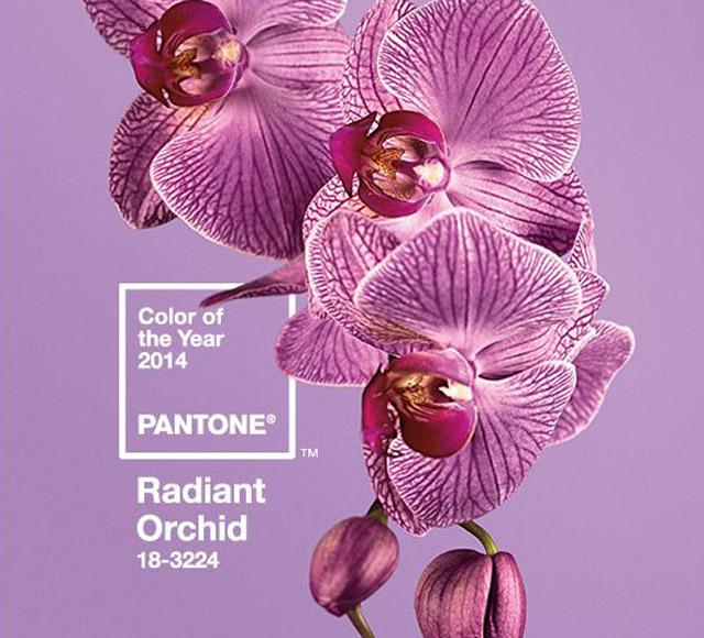 orchidpantone