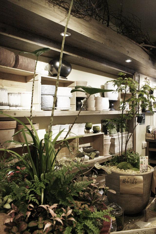 The most gorgeous plant arrangements I have seen