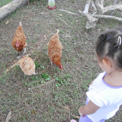 My Kids and a Typical Day in the Farm