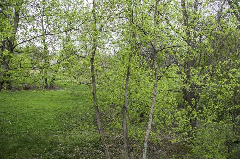 Spring Green!