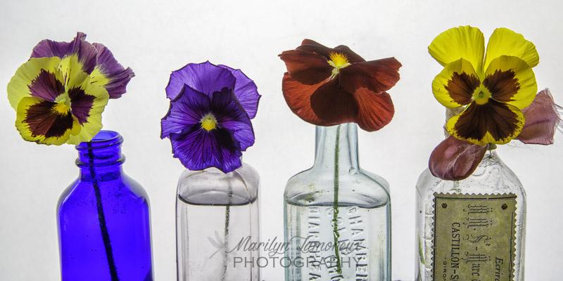 Creating Back-lit Flower Photos