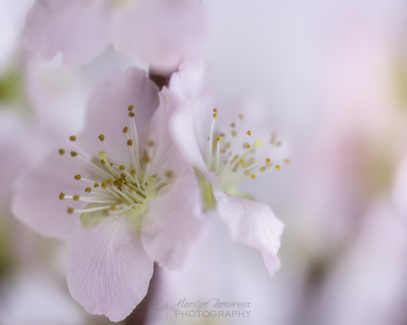 Thinking of Spring