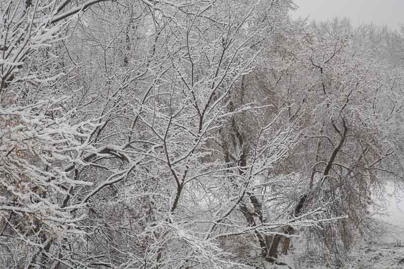 Morning Beauty — Fresh Snow