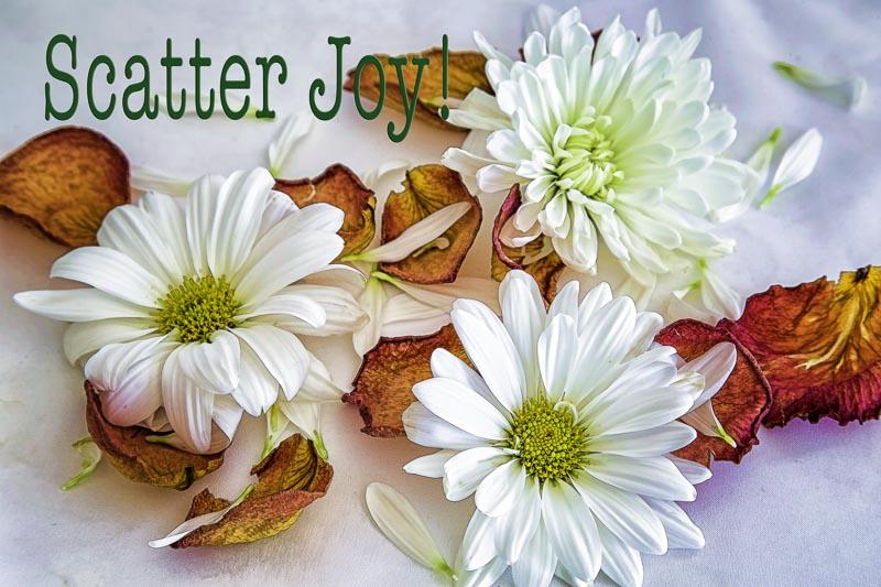 Scatter Joy!