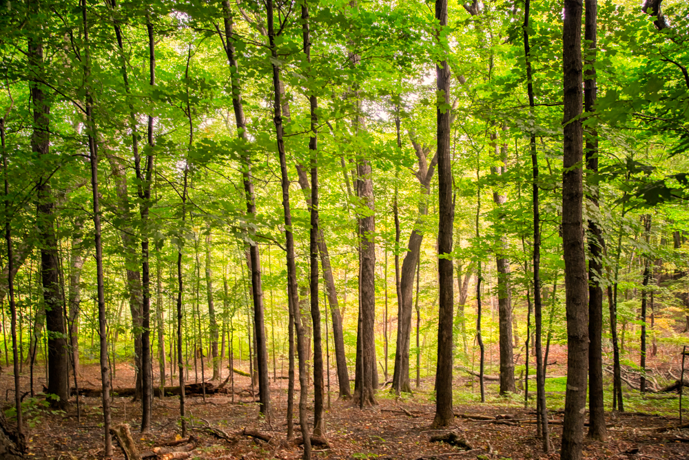Signs of Fall in Wolsfeld Woods