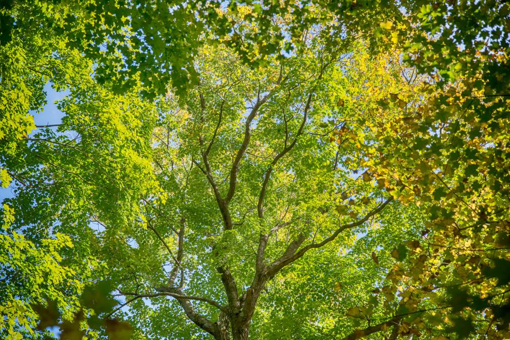 magic of trees