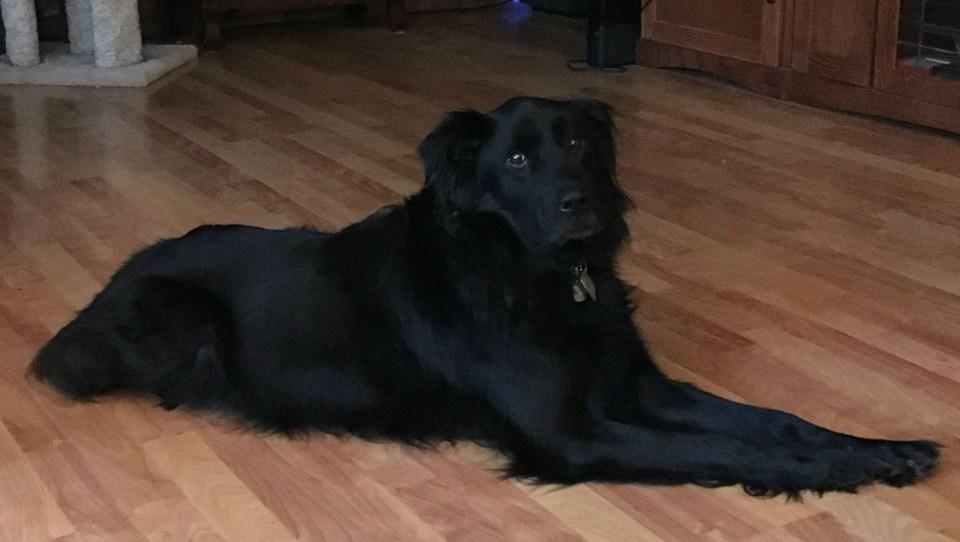 Abbie--a rescue dog