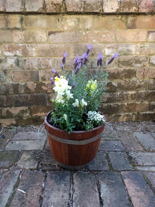 potted-flower-arrangement
