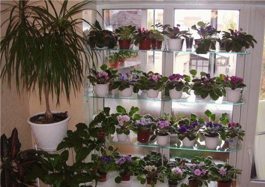 Какие комнатные цветы могут выращиваться на северном окне