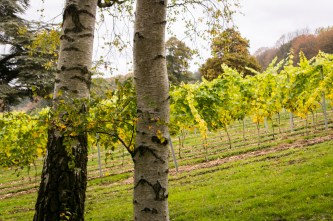 henleyvinyard (1020 of 22)
