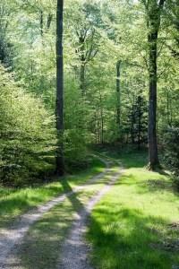 Dansk bøgeskov