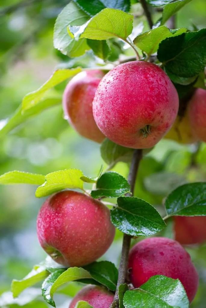 Æbler med morgendag