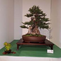 Sequoia2