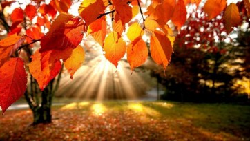 october-sunlit-autumn-leaves