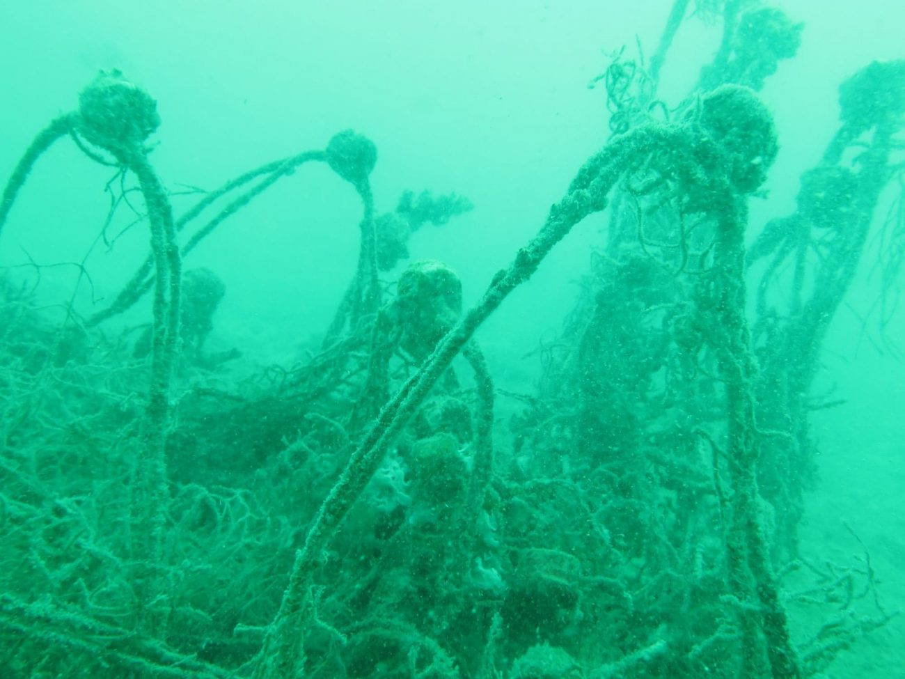 removing ghost nets