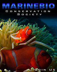 Marine biology careers