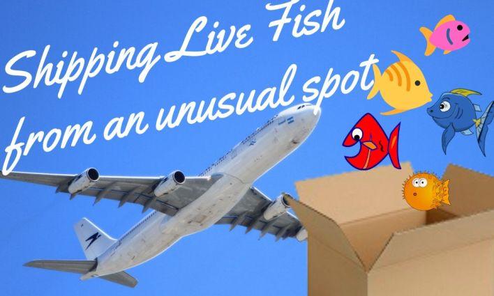 Shipping Live Fish