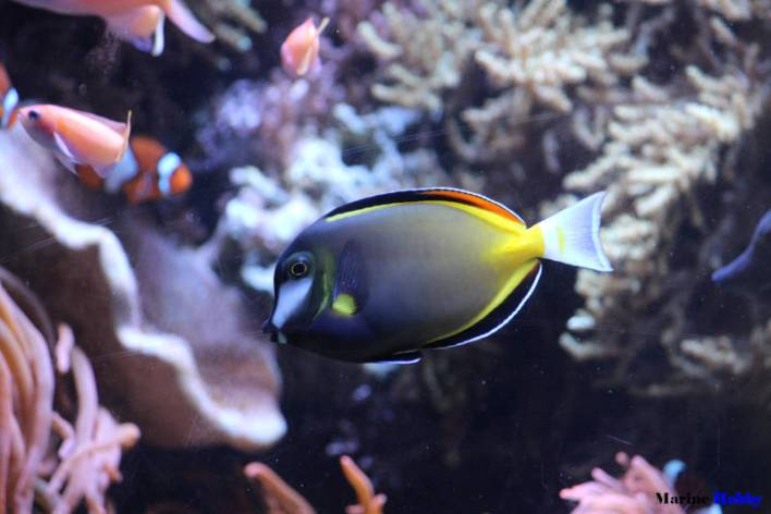 How to setup marine aquarium