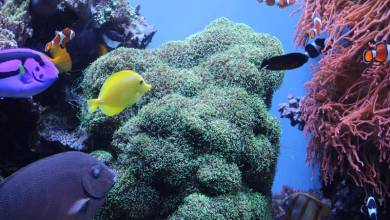 Photo of What is Marine Fish or Saltwater Fish?