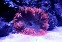 Photo of Top Sea Anemones In A Reef Aquariums